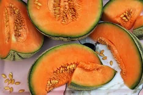 Melon kantalupa