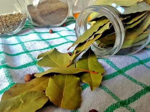 Liść laurowy / zioła