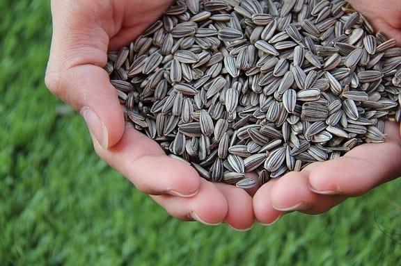 Czy warto dodać ziarna i nasiona do naszej diety