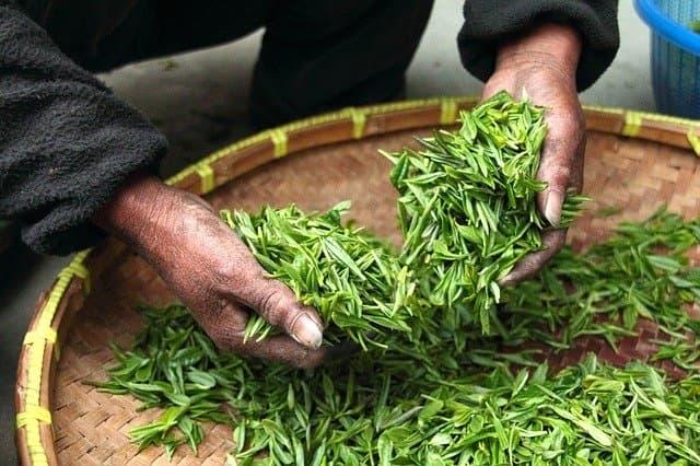 Która herbata ma najwięcej antyoksydantów?